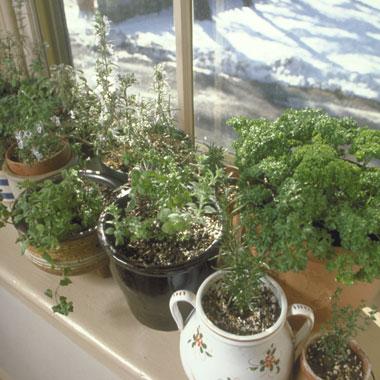 herbs-indoors-380