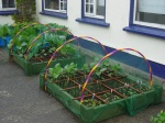 hoops for gardening