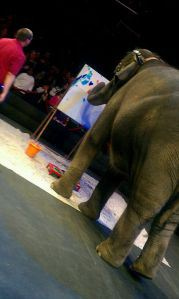 elephant-art-circus