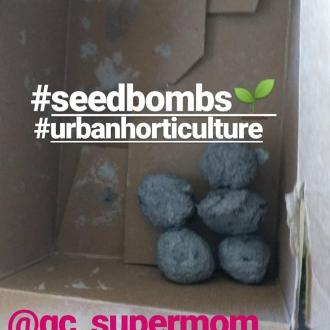 seed bombs greenhouse